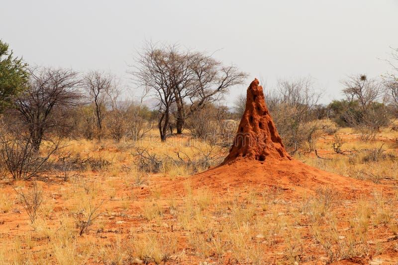 härlig termitkulle - Namibia Afrika royaltyfri fotografi