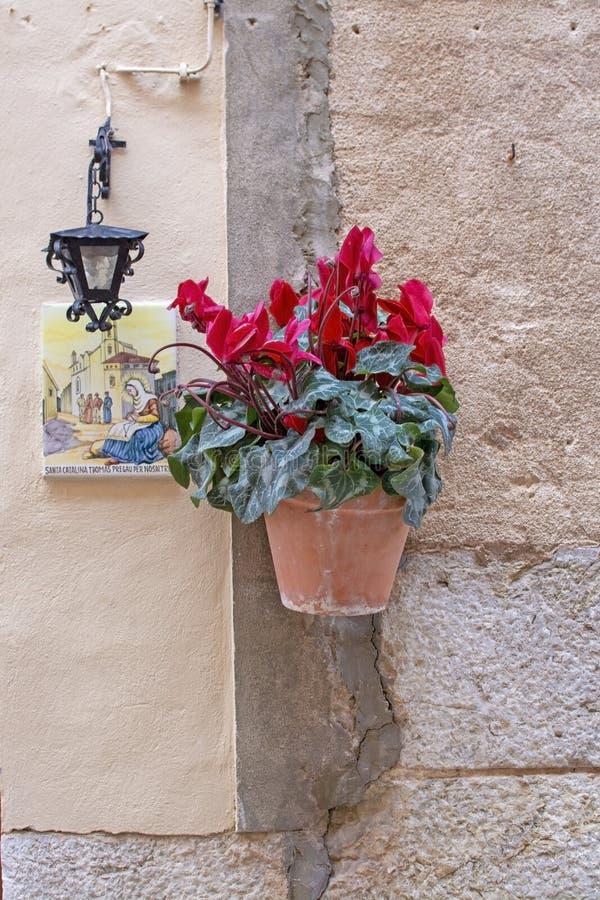Härlig terrakottablomkruka med röda cyklamenblommor Valldemossa Mallorca arkivfoto