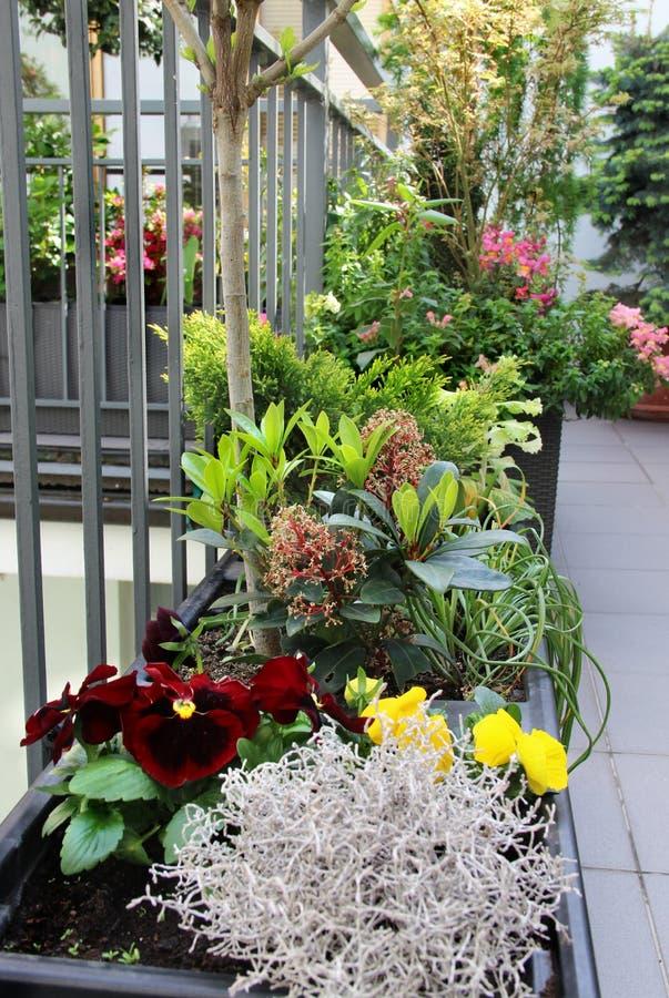 Härlig terrass med många blommor royaltyfri fotografi