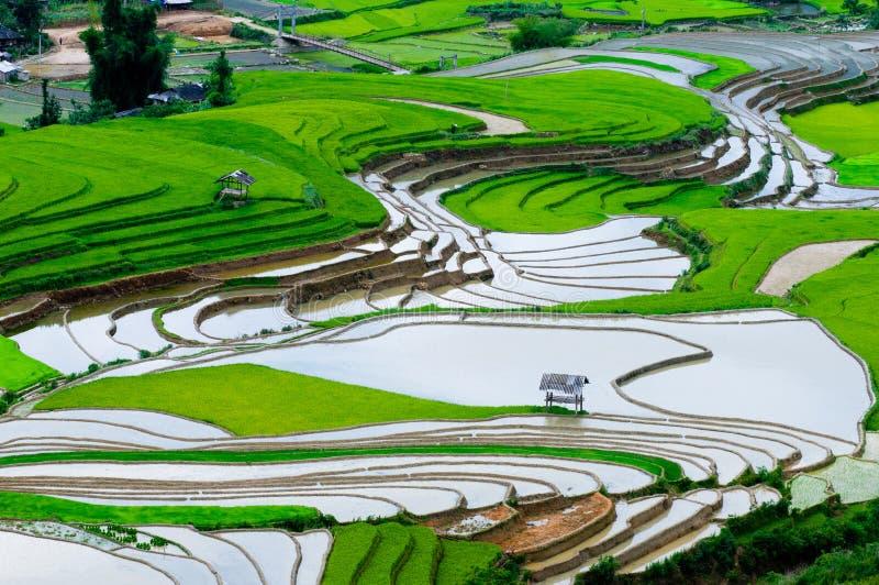Härlig terrasserad risfält i Mu Cang Chai, Vietnam royaltyfri fotografi