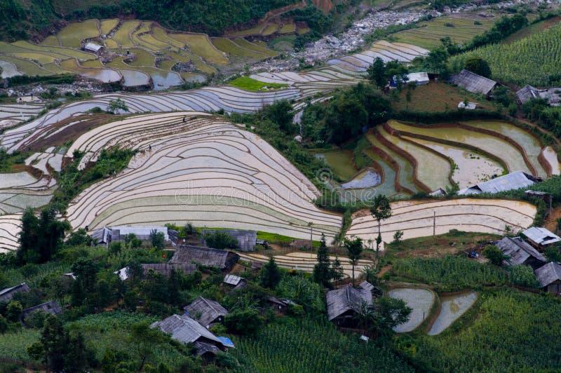 Härlig terrasserad risfält i Mu Cang Chai, Vietnam royaltyfria foton