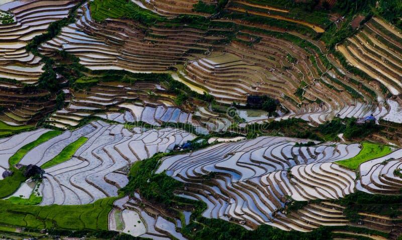 Härlig terrasserad risfält i Mu Cang Chai, Vietnam arkivfoto