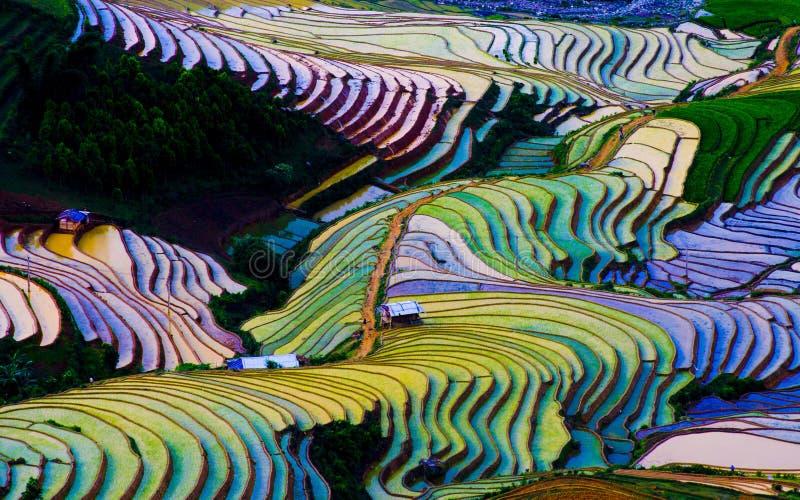 Härlig terrasserad risfält i Mu Cang Chai, Vietnam royaltyfri foto