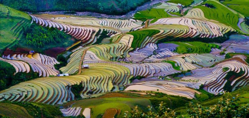 Härlig terrasserad risfält i Mu Cang Chai, Vietnam royaltyfri bild
