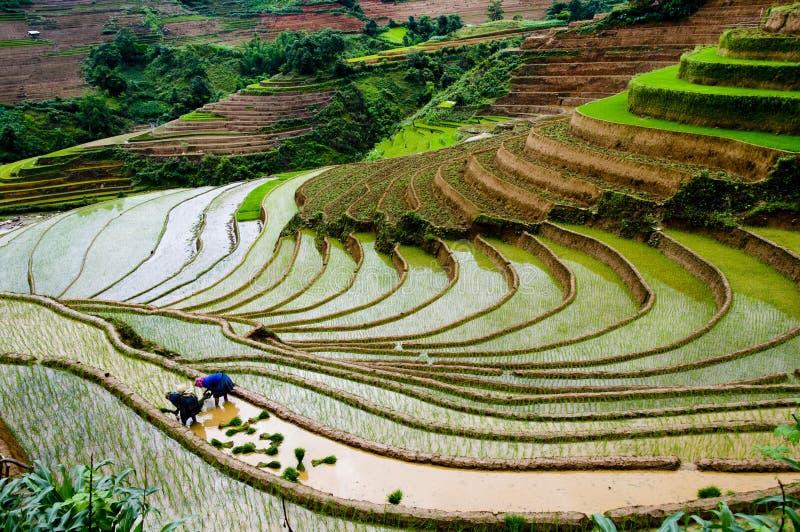 Härlig terrasserad risfält i Mu Cang Chai, Vietnam arkivbilder