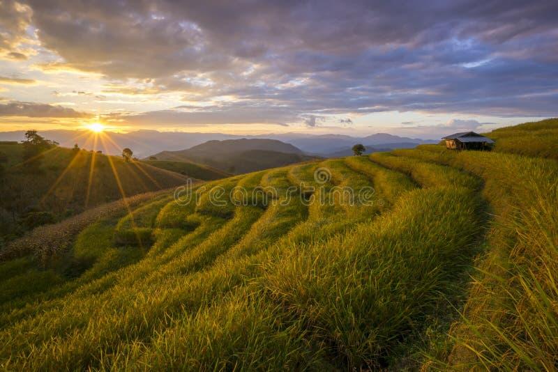 Härlig terrasserad risfält i plockningsäsong Mae Cham Chaingmai, Thailand arkivfoto