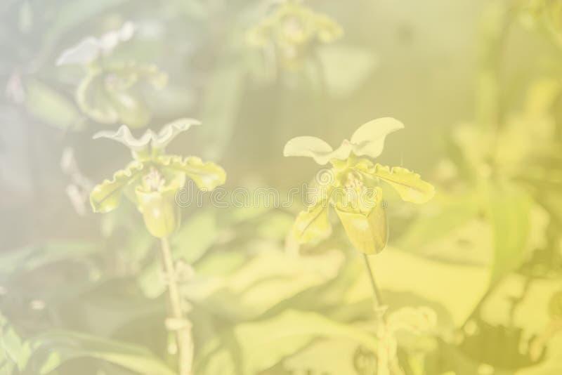 Härlig thailändsk orkidéblommabackround arkivfoto