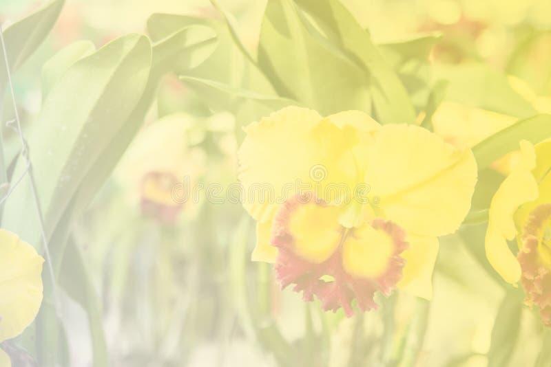 Härlig thailändsk orkidéblommabackround arkivfoton