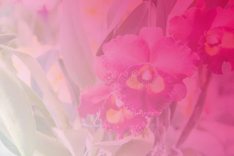 Härlig thailändsk orkidéblommabackround royaltyfri foto
