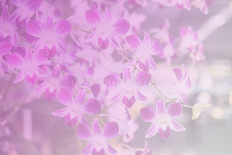Härlig thailändsk orkidéblommabackround arkivbild