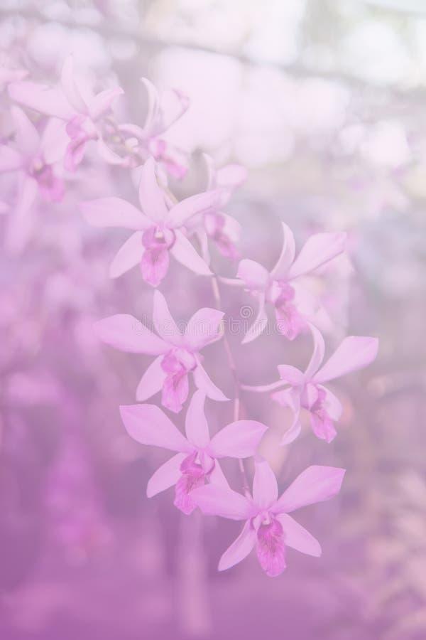Härlig thailändsk orkidéblommabackround fotografering för bildbyråer