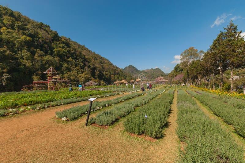Härlig trädgård, Doi Angkang trädgård arkivfoto
