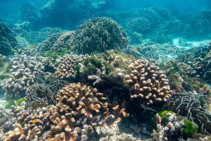 Härlig trädgård för korallrev i den similan ön arkivbilder