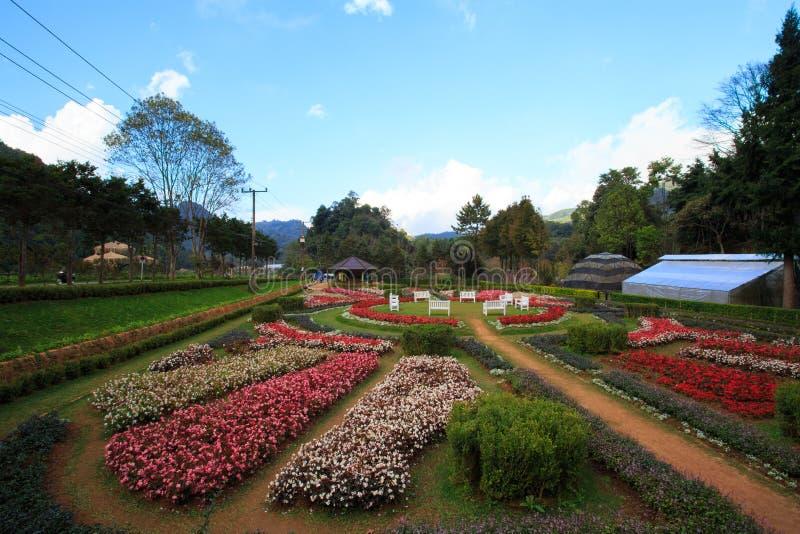 Härlig trädgård i Chiang Mai, Thailand royaltyfri bild