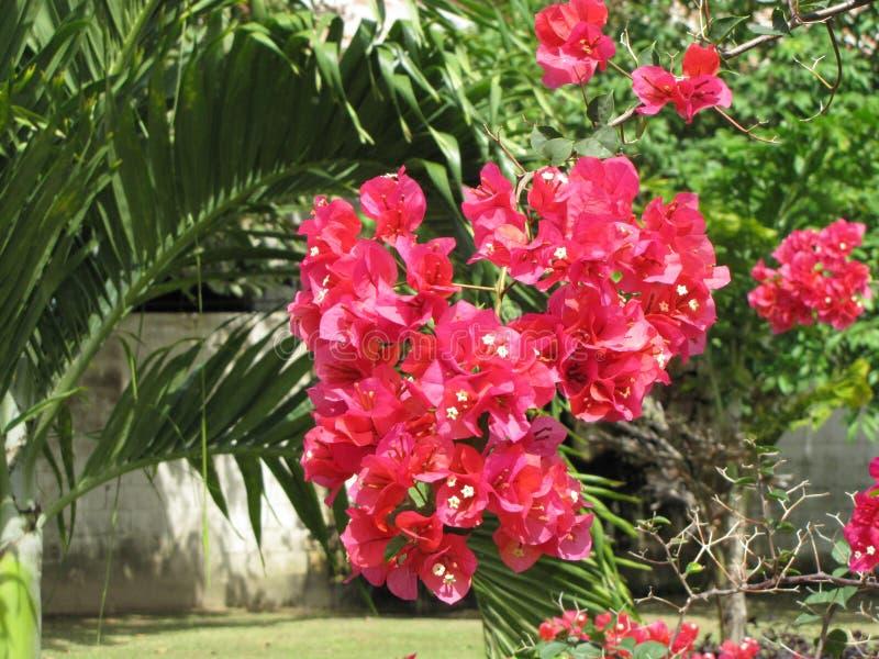 Härlig trädgård, röda blommor, tropiska växter, gröna blad royaltyfri bild