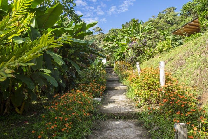 Härlig trädgårds- bana som leder till en kabin som omges av frodiga tropiska växter arkivbild