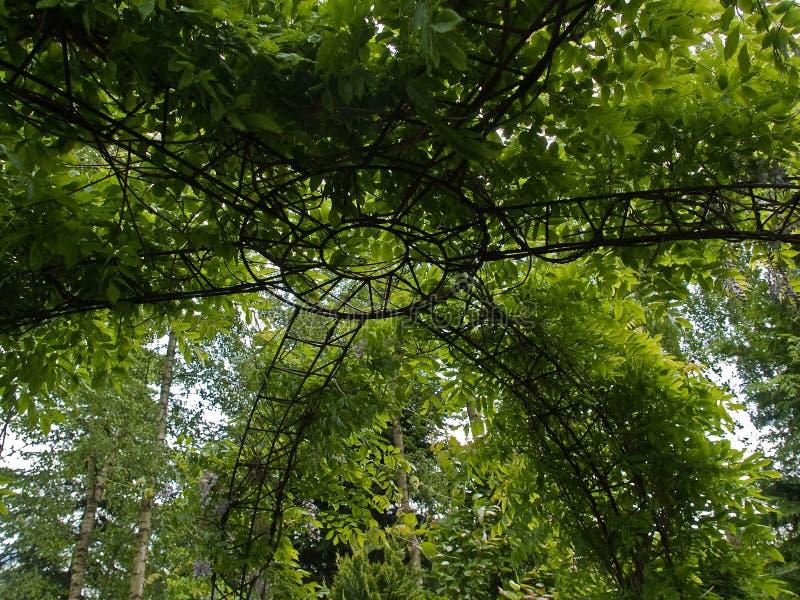 härlig trädgårds- grön pergola royaltyfri fotografi