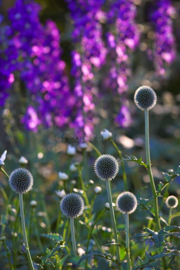härlig trädgårds- morgonsommar arkivfoto