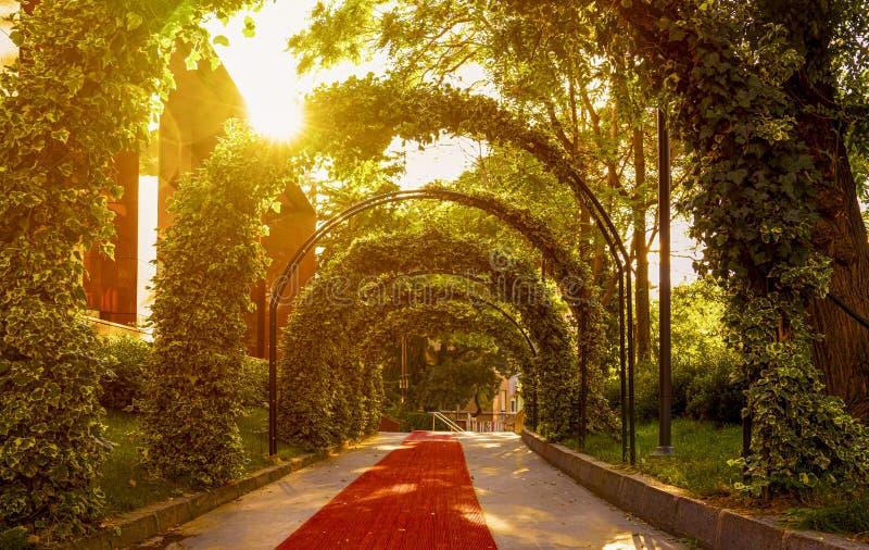 Härlig trädgårdvalvgång Frodig grön hängande lövverk som bildar den dramatiska valvgången med solnedgångljus som igenom strömmar  arkivfoto