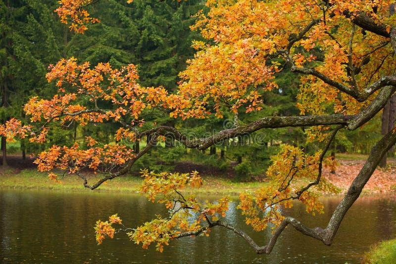 härlig tree för höst arkivbilder