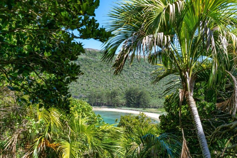 Härlig tropisk ösikt av den norr fjärdstranden på Lord Howe Island, New South Wales, Australien, sedd igenom subtropisk skog royaltyfri foto