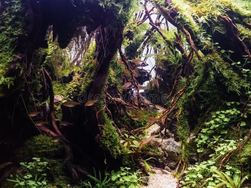 Härlig tropisk aquascape, grön växt för naturakvarium en tr royaltyfri bild