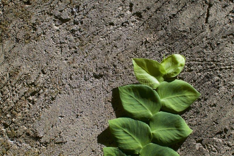 Härlig tropisk grön krypa växt arkivbild