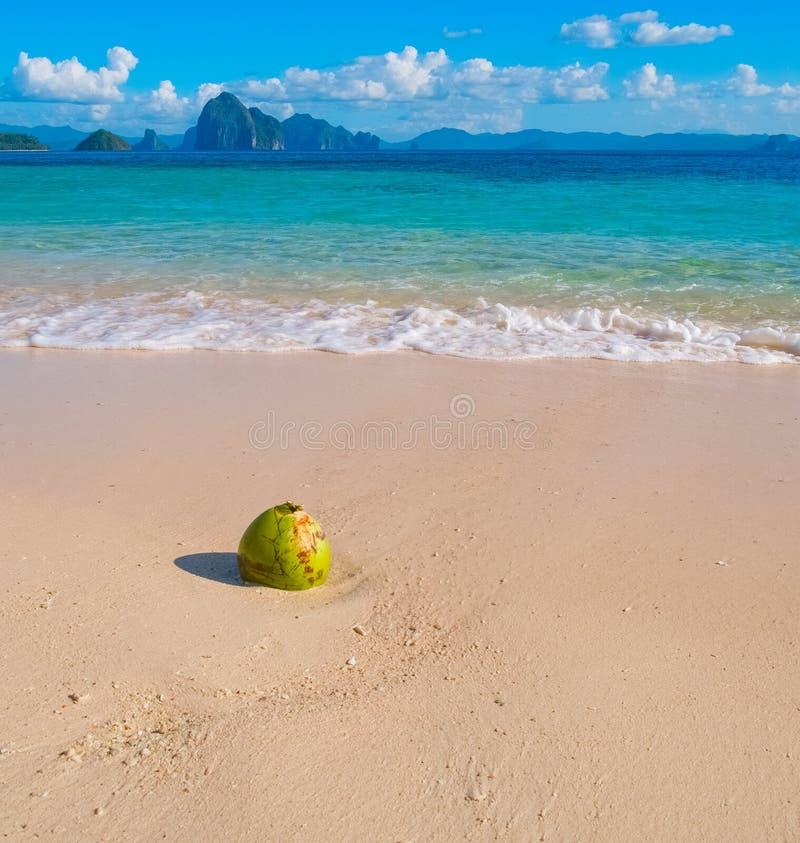 Härlig tropisk sandstrand och kokosnöt fotografering för bildbyråer