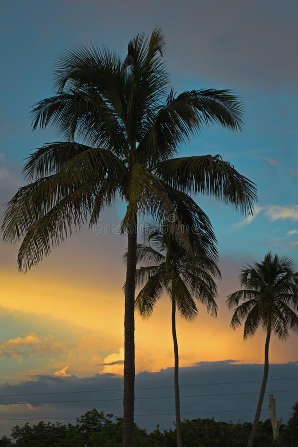 Härlig tropisk solnedgång på Miami Beach i Florida arkivbild