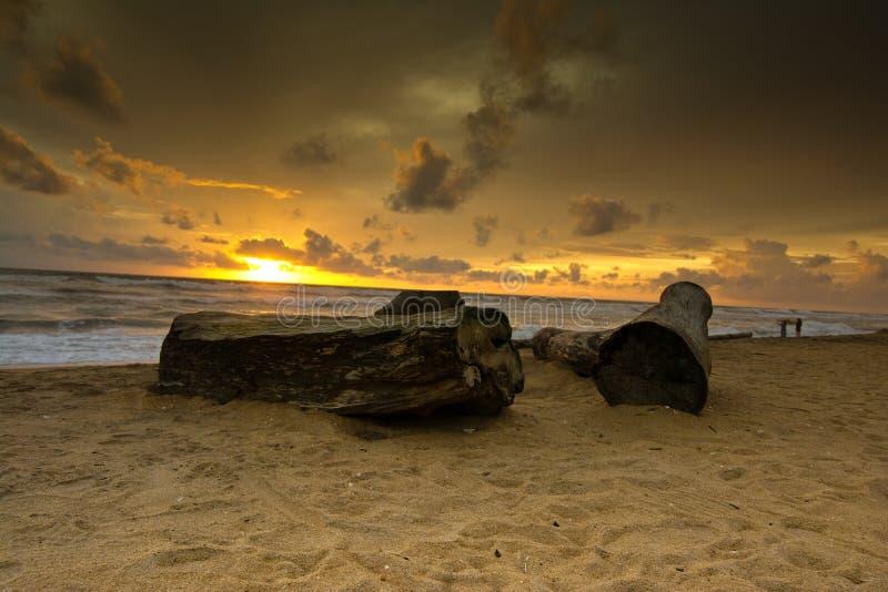 Härlig tropisk strand i Sri Lanka arkivbilder