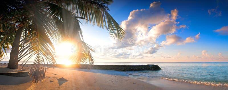 Härlig tropisk strand med konturpalmträdsolnedgång arkivfoton