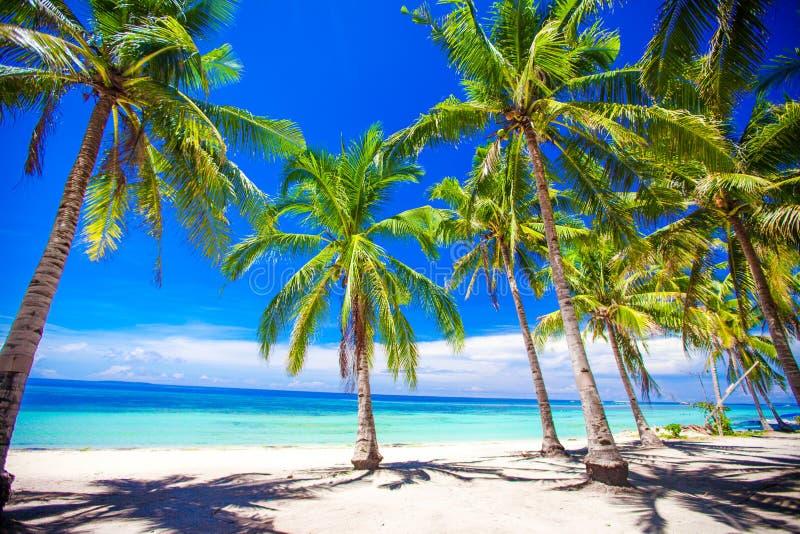 Härlig tropisk strand med palmträd, vit sand, turkoshavvatten och blå himmel royaltyfri fotografi