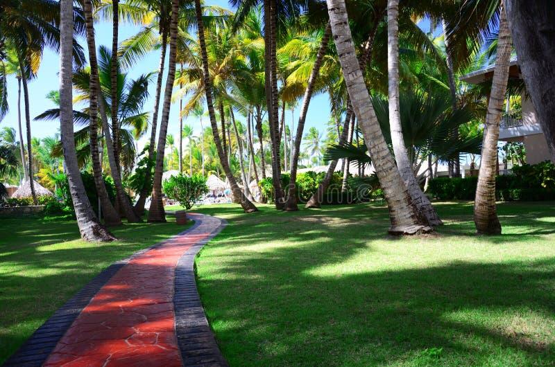 Härlig tropisk trädgård med palmträd och blommor i lyx royaltyfri foto
