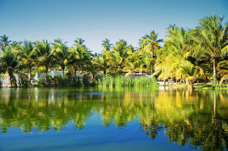 Härlig tropisk trädgård med sjön i den carribean semesterorten, Dominic royaltyfria bilder