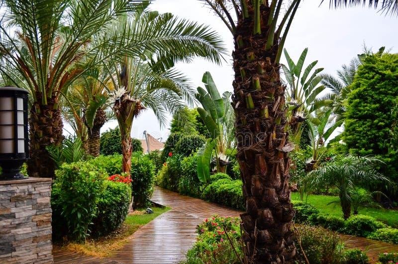 Härlig tropisk trädgårds- bana royaltyfria foton