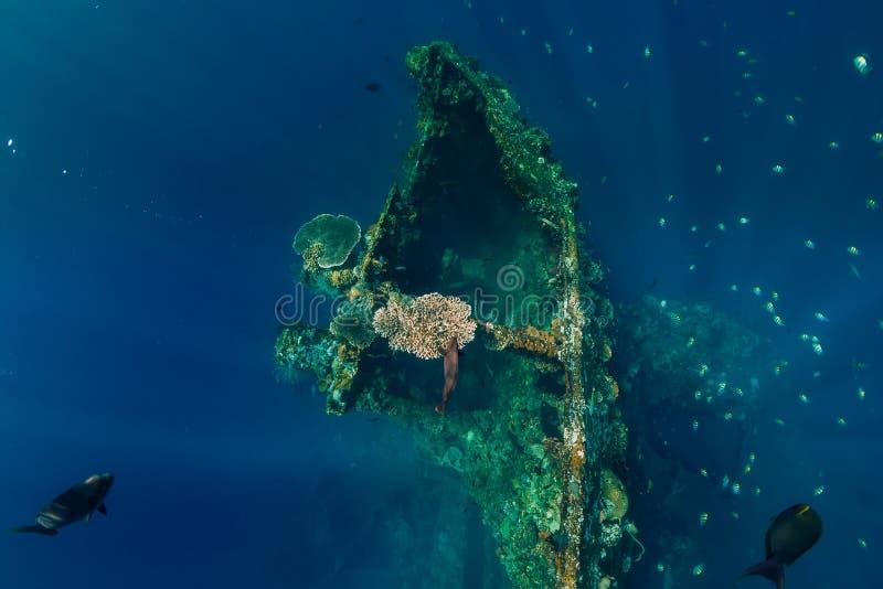 Härlig undervattens- sikt med fisken på skeppsbrott royaltyfri bild