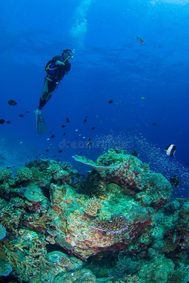 härlig undervattens- värld royaltyfri bild
