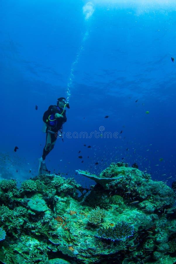 härlig undervattens- värld arkivfoto