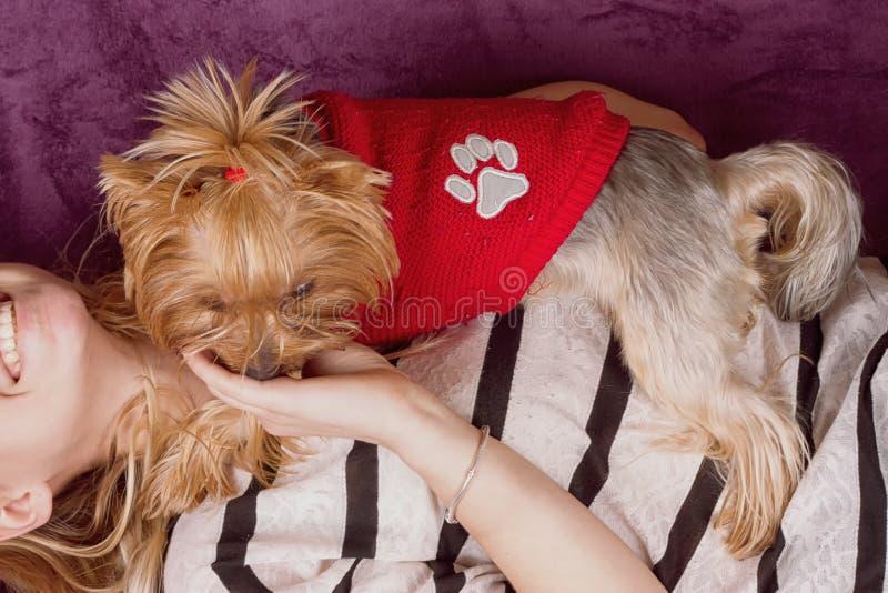 Härlig ung flicka som spelar med hennes hemmastadda lägga för yorkshire terrier ner royaltyfri bild
