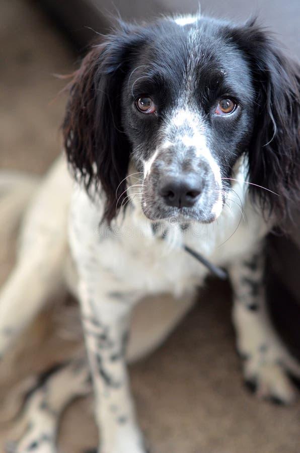 Härlig ung hund fotografering för bildbyråer