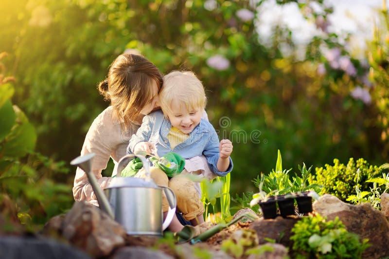 Härlig ung kvinna och hennes gullig son som planterar plantor i säng i hemhjälpträdgården på sommardagen arkivfoto