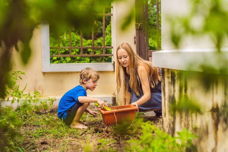 Härlig ung kvinna och hennes gullig son som planterar plantor i säng i hemhjälpträdgården på sommardagen trädgårds- arbeta i träd arkivbild