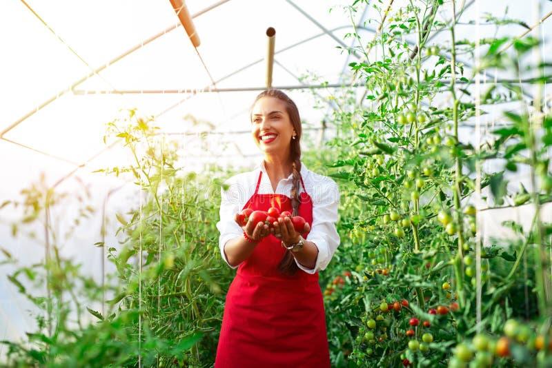 Härlig ung kvinna som skördar nya tomater från trädgården och visar på kameran royaltyfria bilder