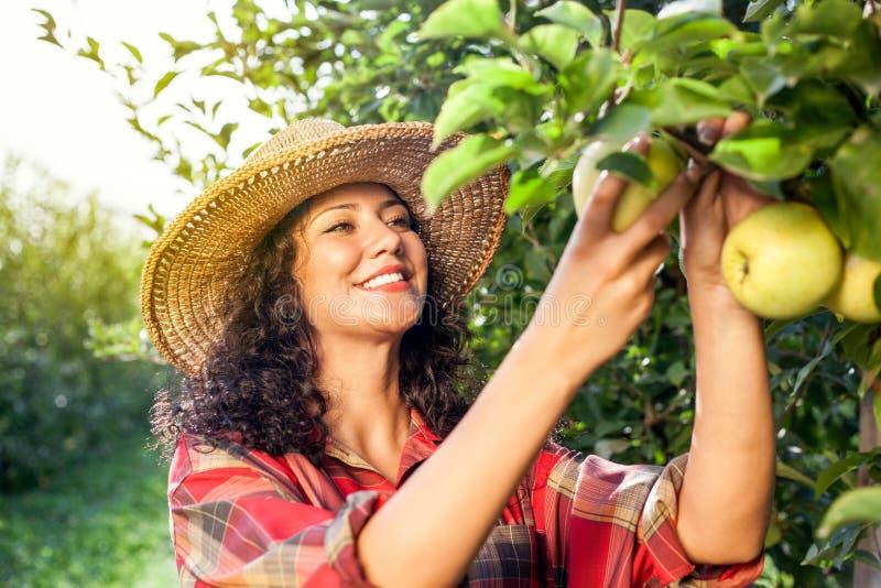 Härlig ung kvinna som väljer mogna organiska äpplen fotografering för bildbyråer