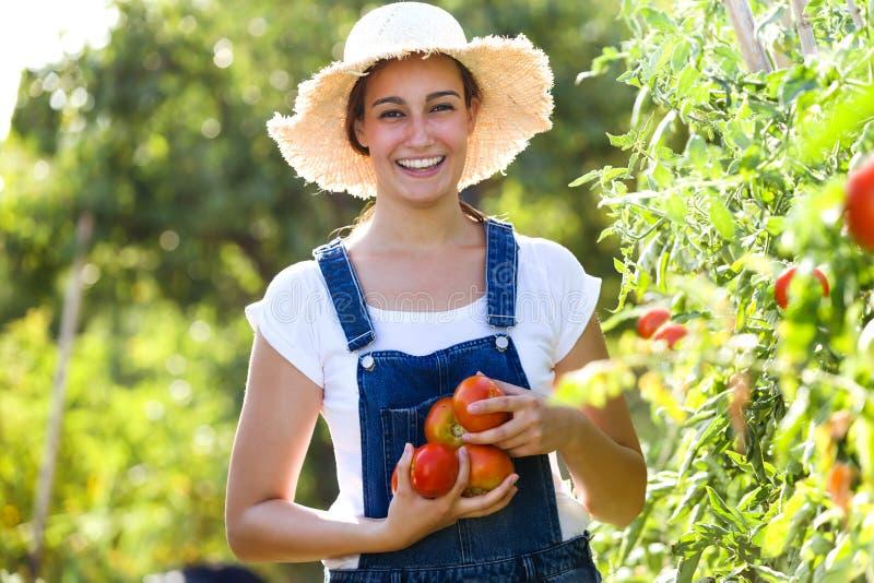 Härlig ung le kvinna som skördar nya tomater från trädgården och visar på kameran royaltyfria foton