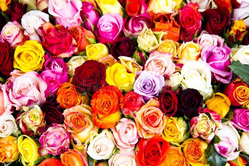 Härlig uppsättning av blommaknoppar royaltyfria bilder