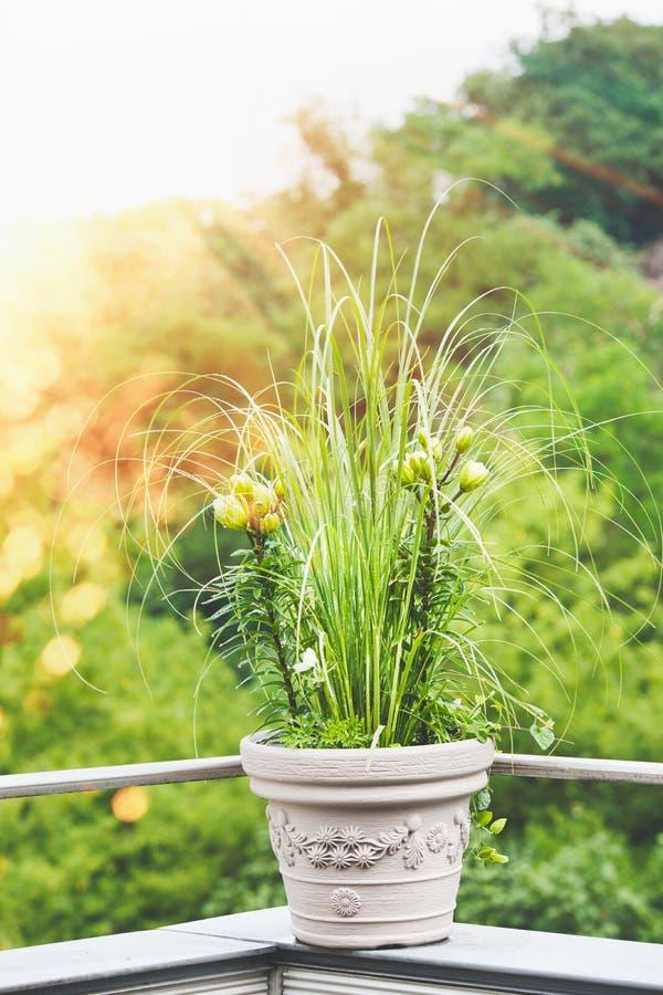 Härlig uteplatsblommakruka med pampasgräs och gräsplanliljan på balkong eller terrass i solnedgångljus Stads- arbeta i trädgården arkivfoto