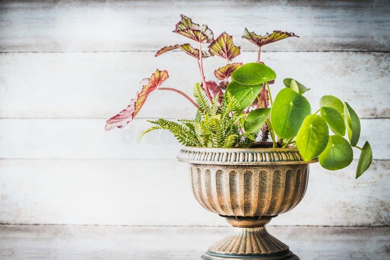 Härlig uteplatsurnaplanter med olika växter på vit träväggbakgrund, främre sikt Blomsterhandlare och behållare som arbeta i trädg arkivbilder