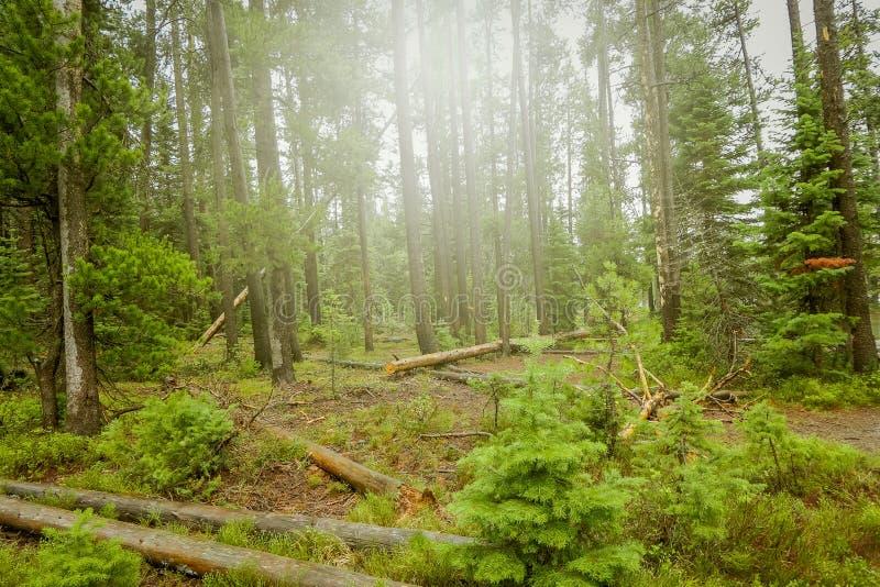 Härlig utomhus- sikt av den dimmiga skogen, lokaliserade storslagna Tetons nästan Jenny Lake royaltyfri bild