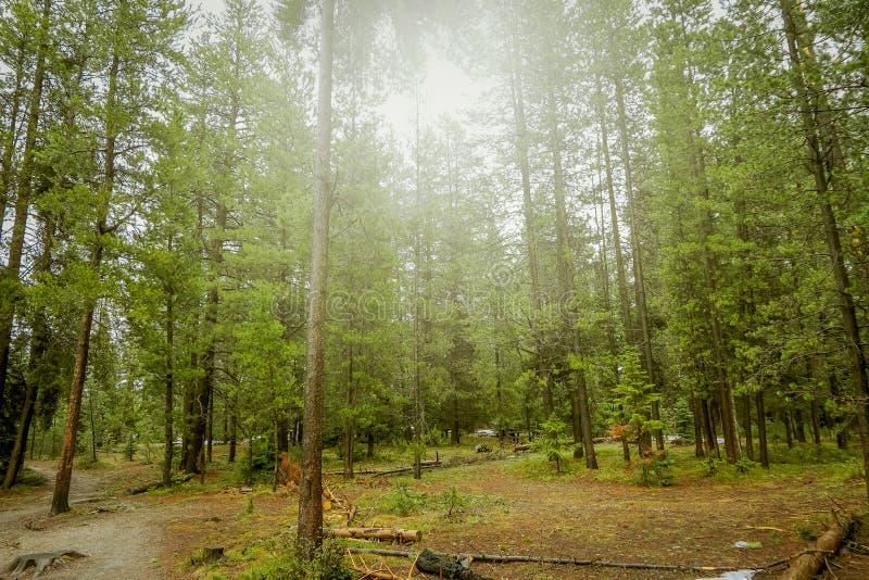 Härlig utomhus- sikt av den dimmiga skogen, lokaliserade storslagna Tetons nästan Jenny Lake royaltyfri fotografi